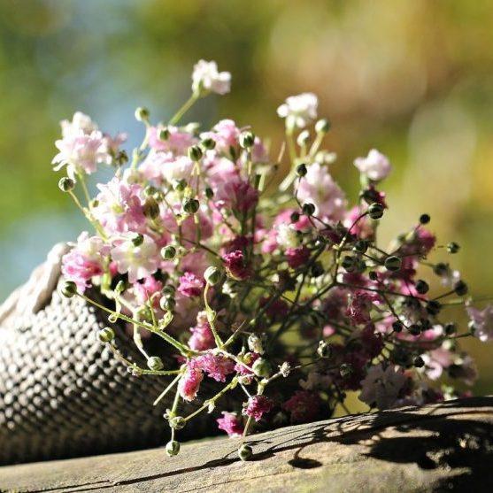 bag-gypsofilia-seeds-1716655_1920